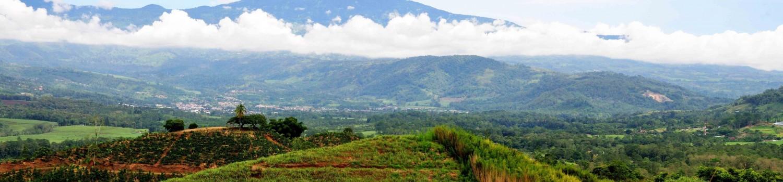 Ethiopian Harar