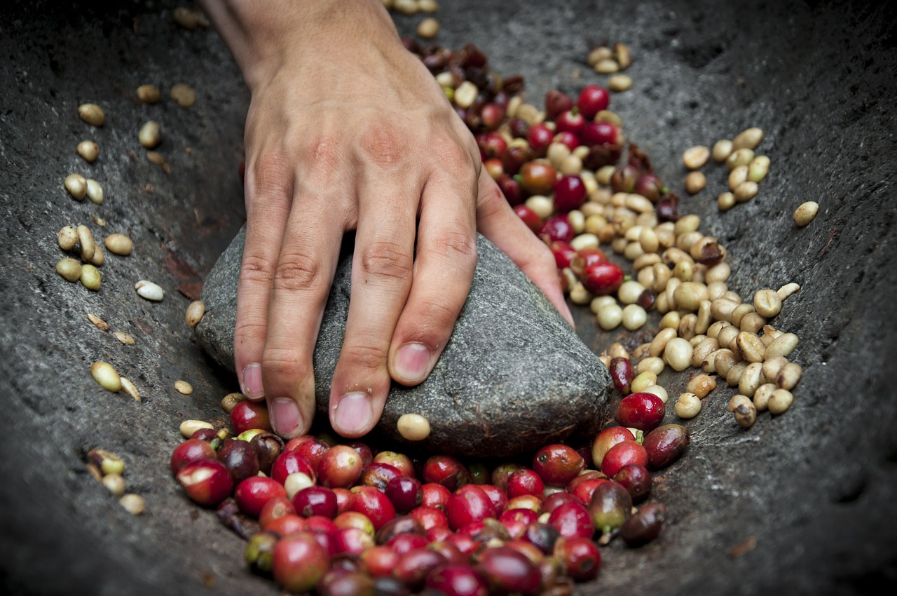 How to Produce Arabica and Robusta Single Origin Coffee Beans